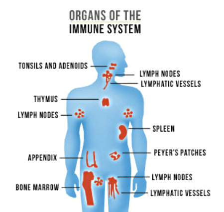 How to Use Lifestyle Habits to Boost Your Immune System